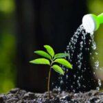 วิธีการให้น้ำแก่พืช